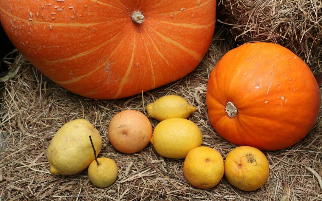 Halloween a naše novinka! Připravte dětem zážitek.
